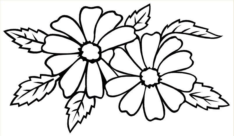 hình bông hoa đẹp 5