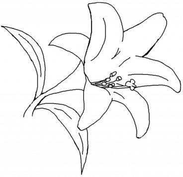 hình bông hoa đẹp