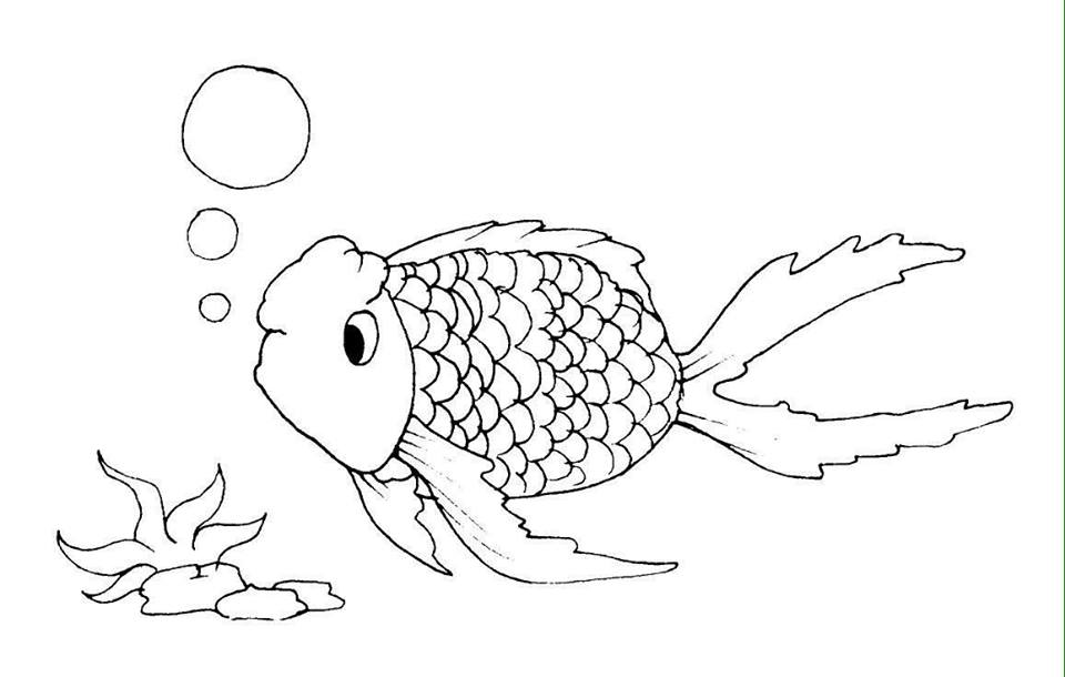 hình con cá