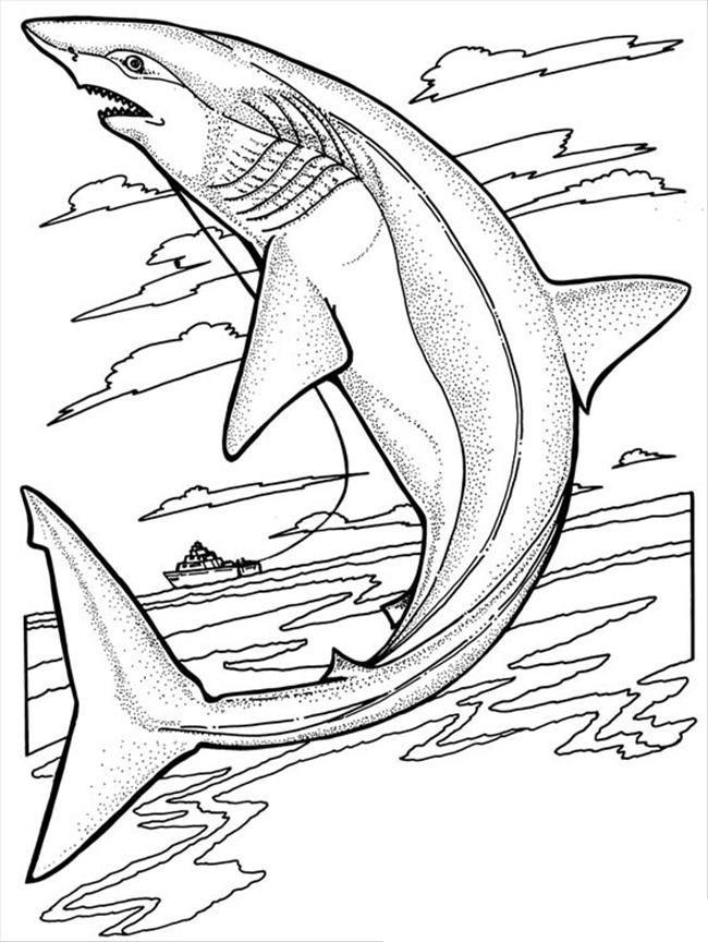 Hình tô màu cá mập đẹp