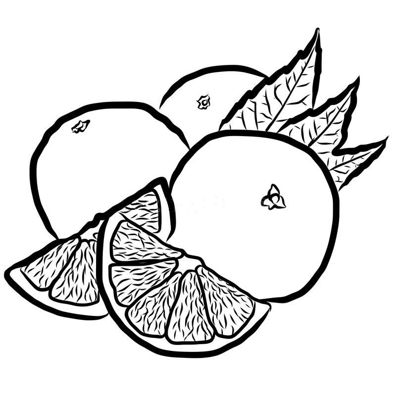 Hình tô màu quả cam đẹp nhất