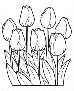 hoa tulip đẹp