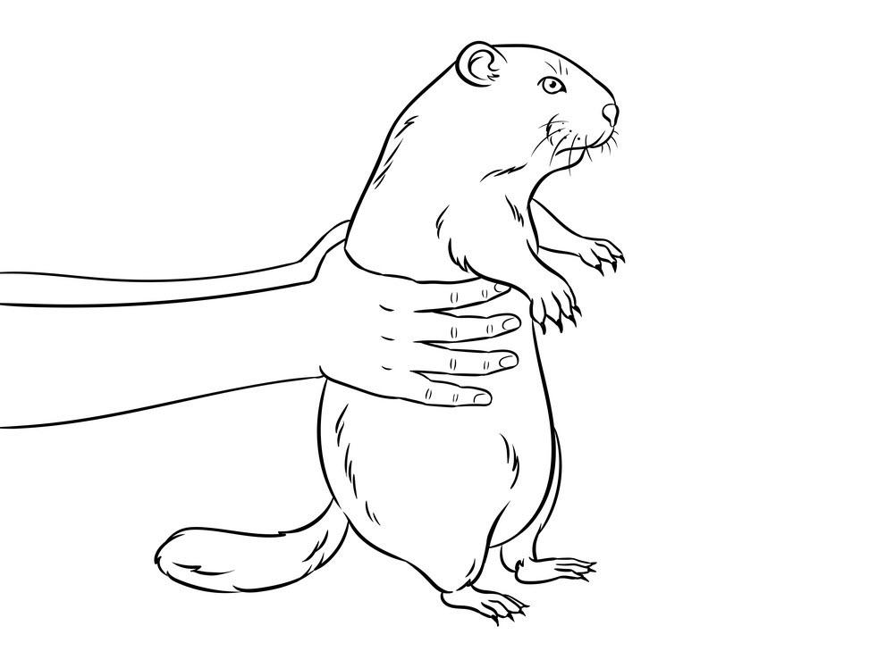 Tranh tô màu bàn tay bế động vật