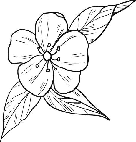 Tranh tô màu bông hoa đào đẹp