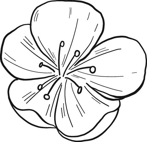 Tranh tô màu bông hoa đào
