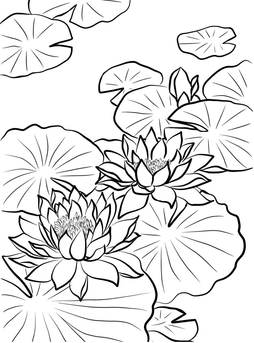 Tranh tô màu bông hoa sen đang nở