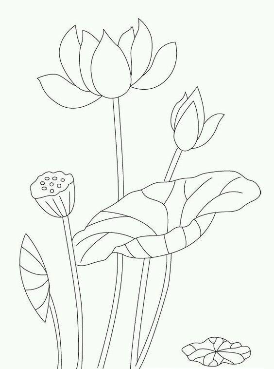 Tranh tô màu bông hoa sen đẹp