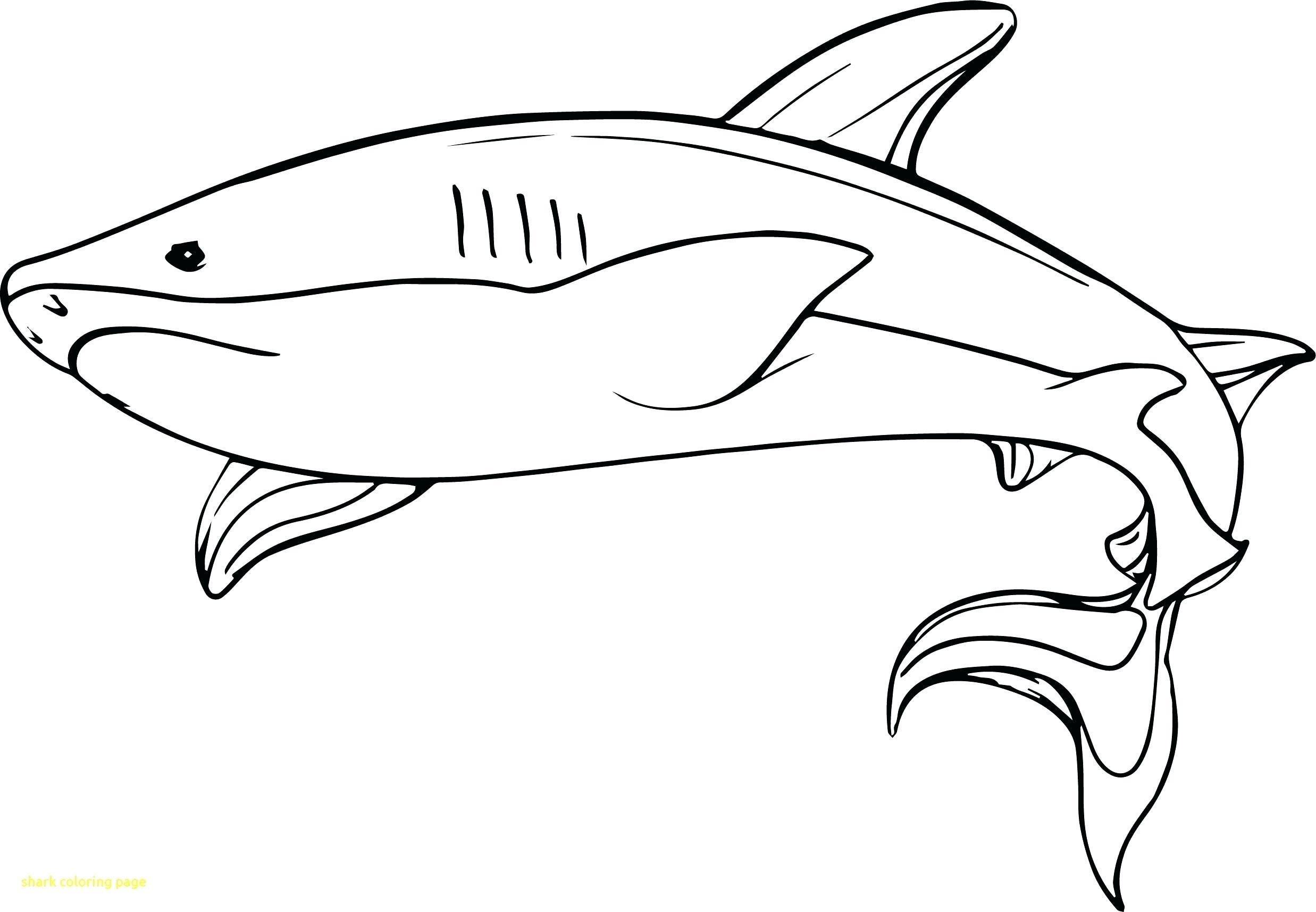 Tranh tô màu cá mập đẹp nhất
