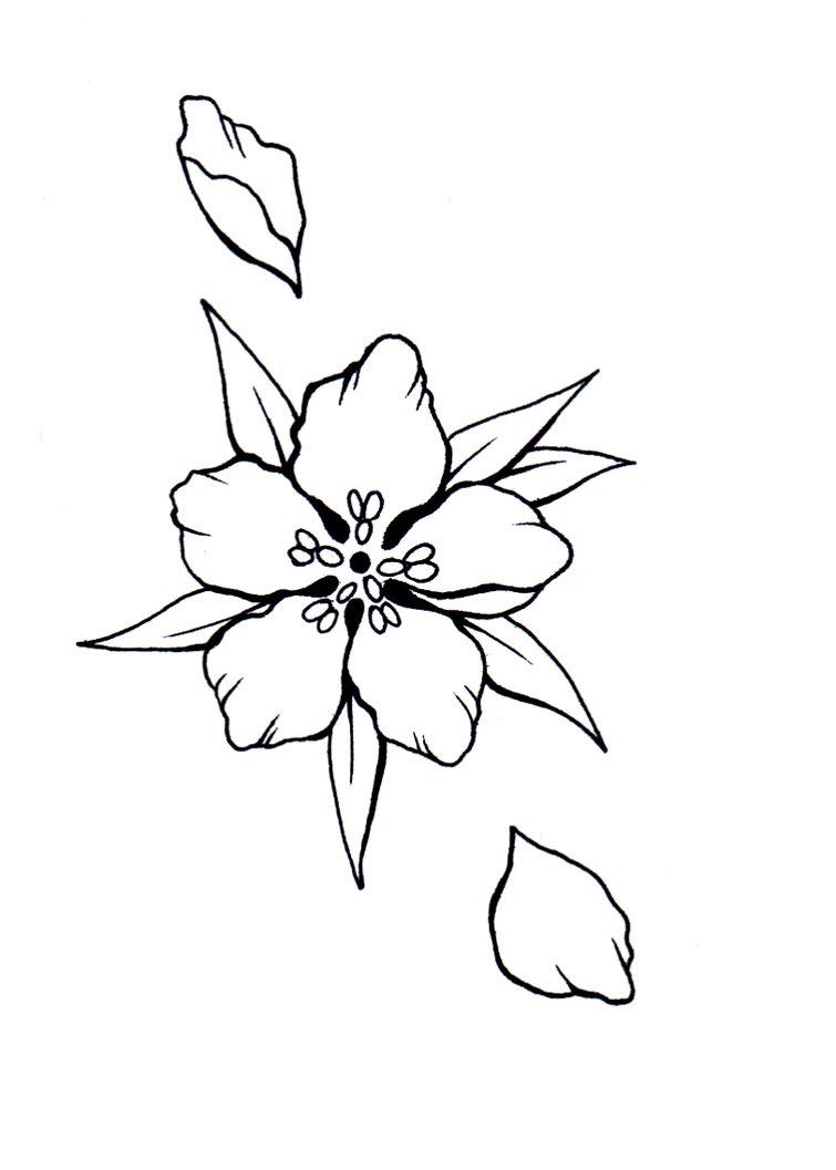 Tranh tô màu cánh hoa anh đào