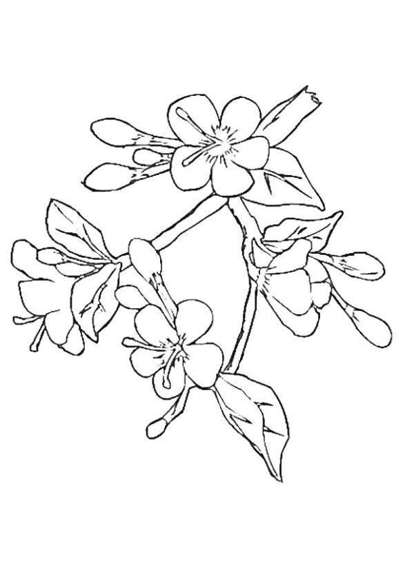 Tranh tô màu cành hoa đào đẹp
