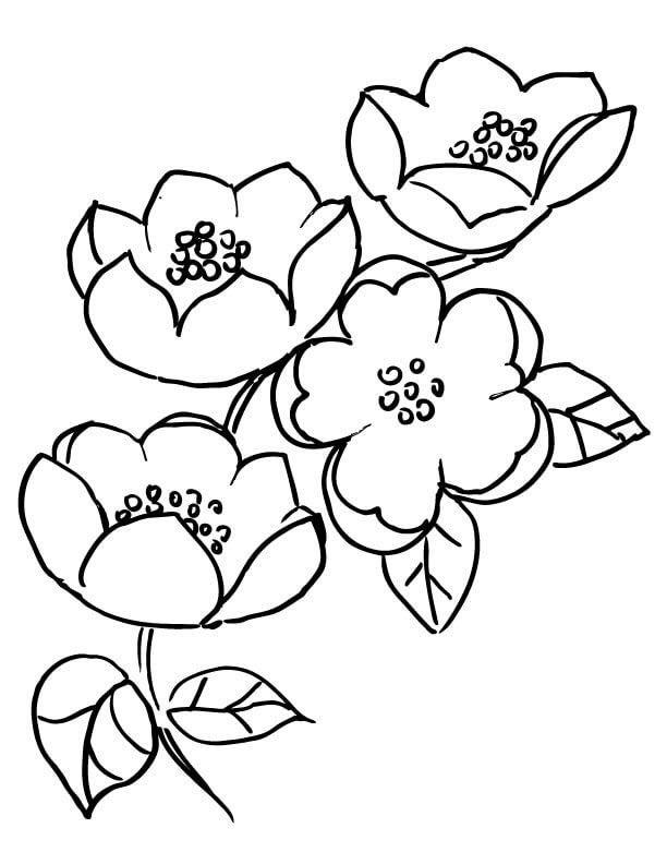 Tranh tô màu cánh hoa đào