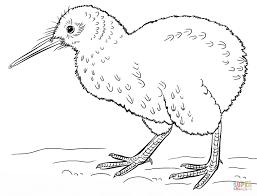 Tranh tô màu chim đất kiwi