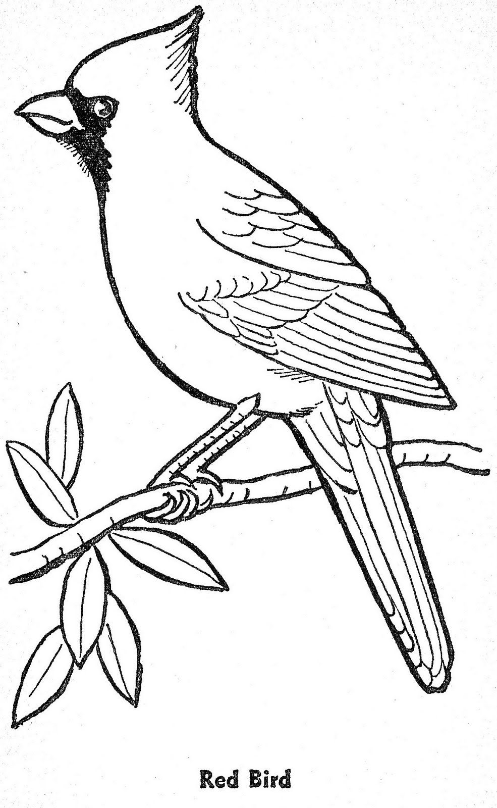 Tranh tô màu chim đỏ liếc mắt nhìn