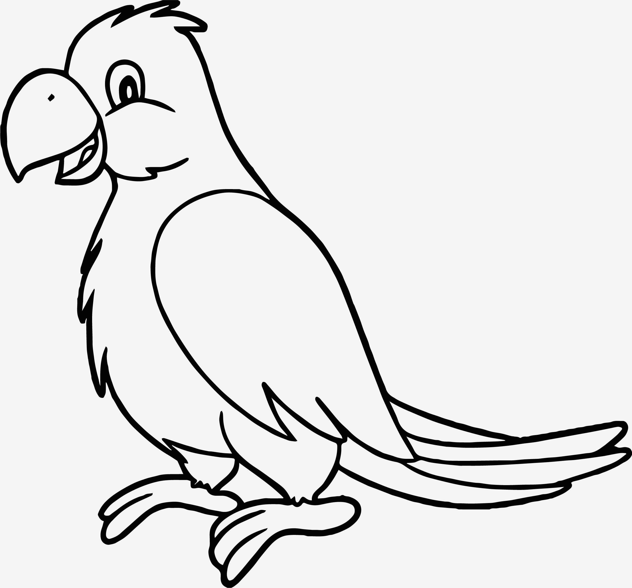 Tranh tô màu chim mỏ khoằm