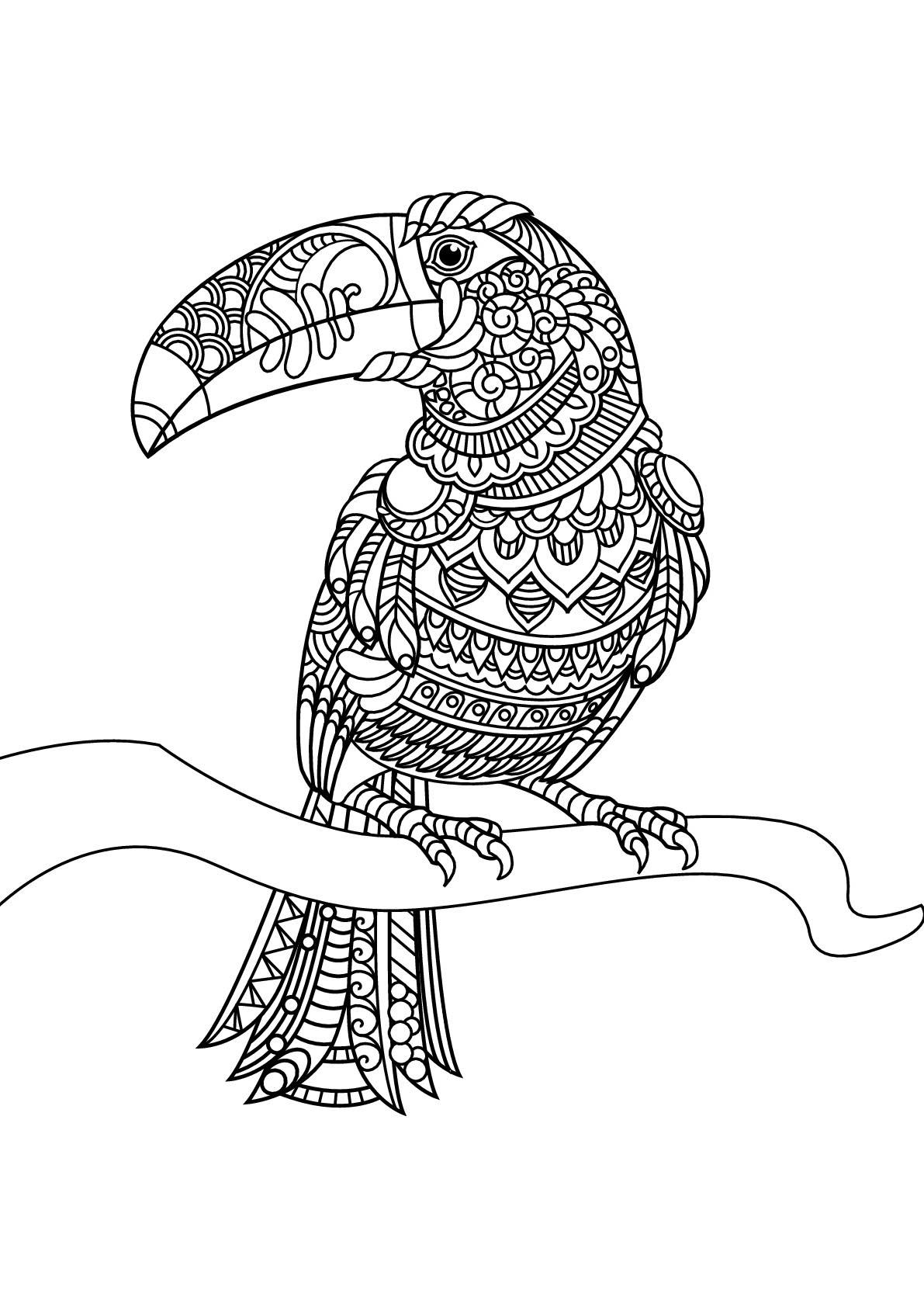 Tranh tô màu chim vẹt mỏ lớn nhiều họa tiết