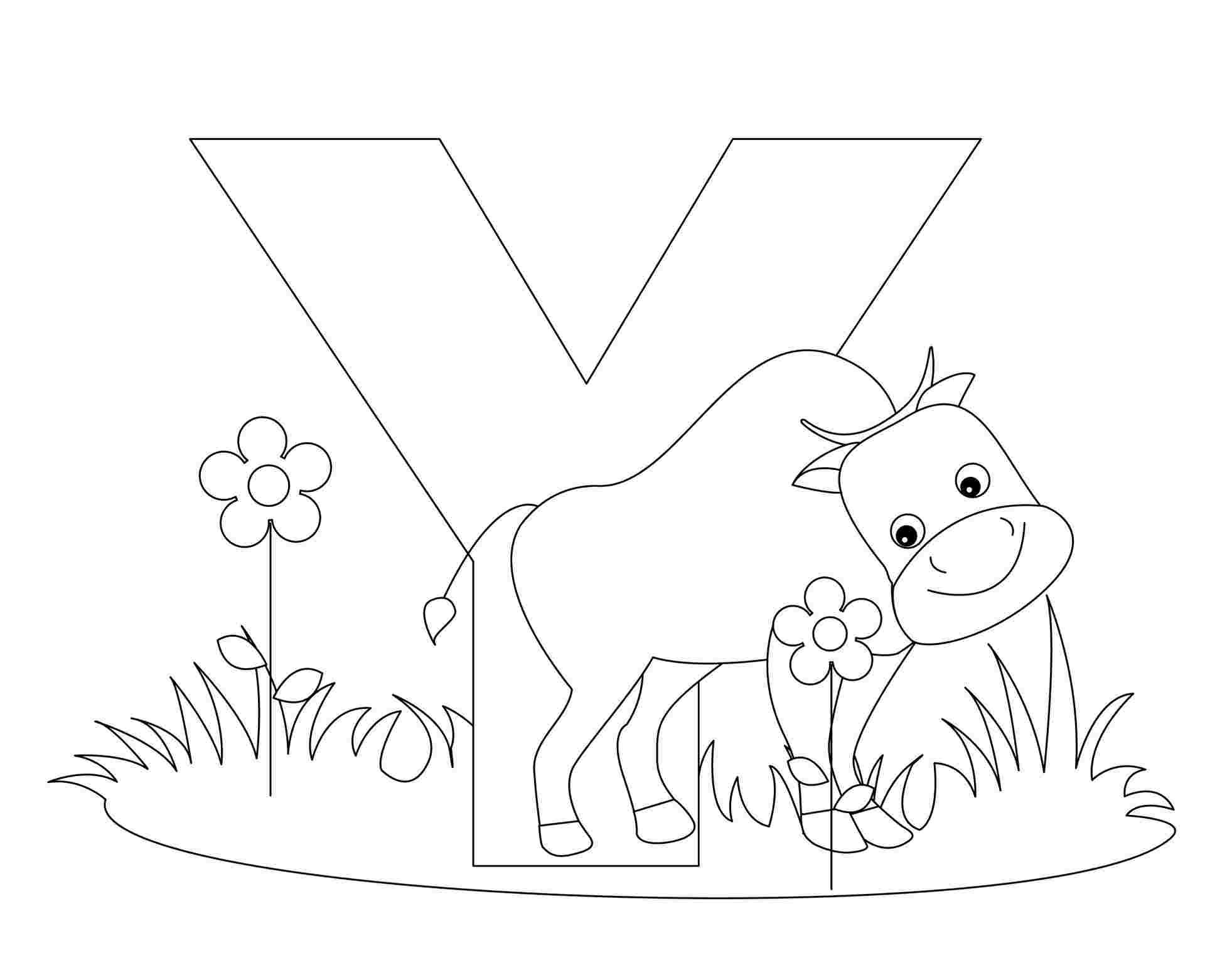 Tranh tô màu chữ cái Y con bò