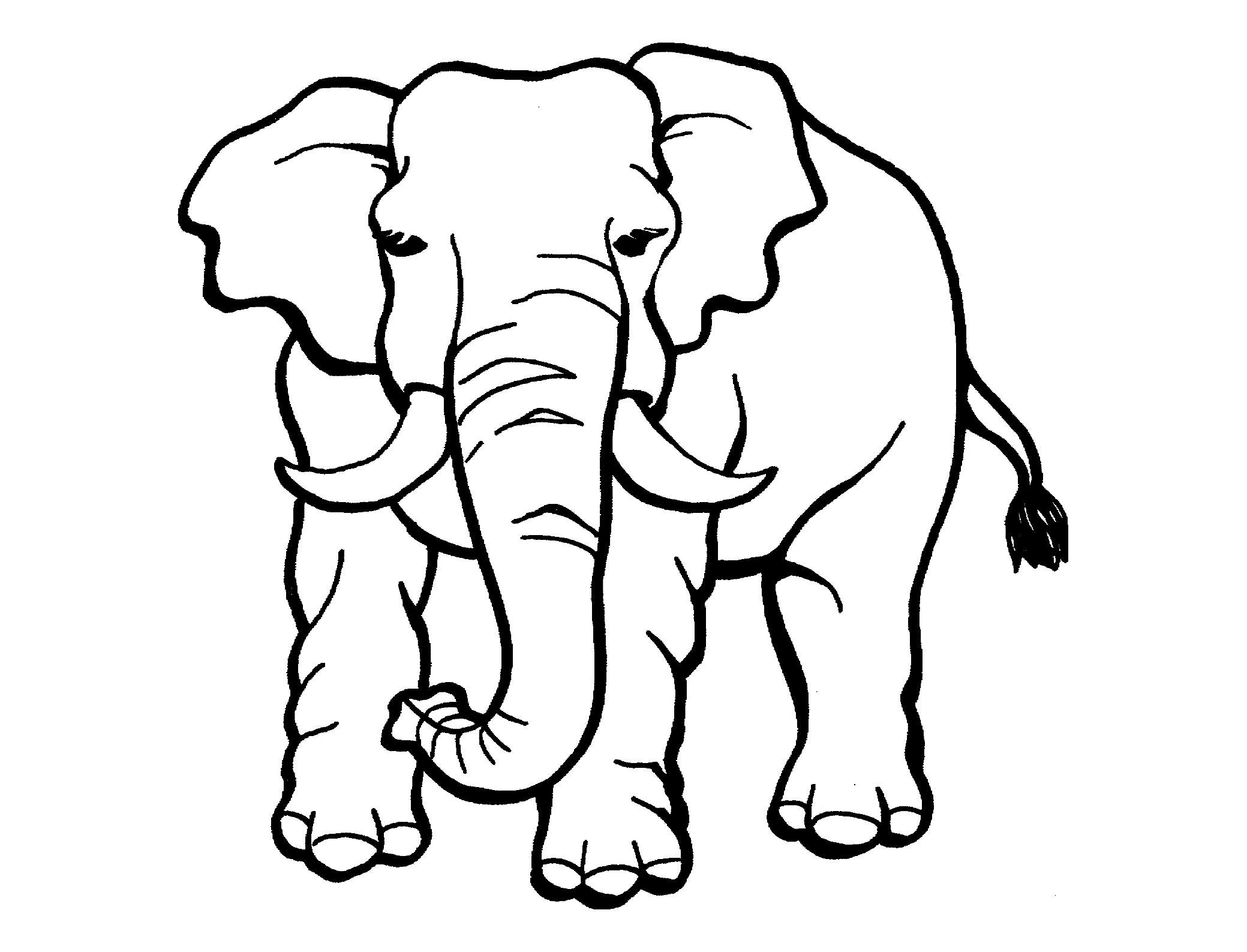 Tranh tô màu chú voi cực đẹp