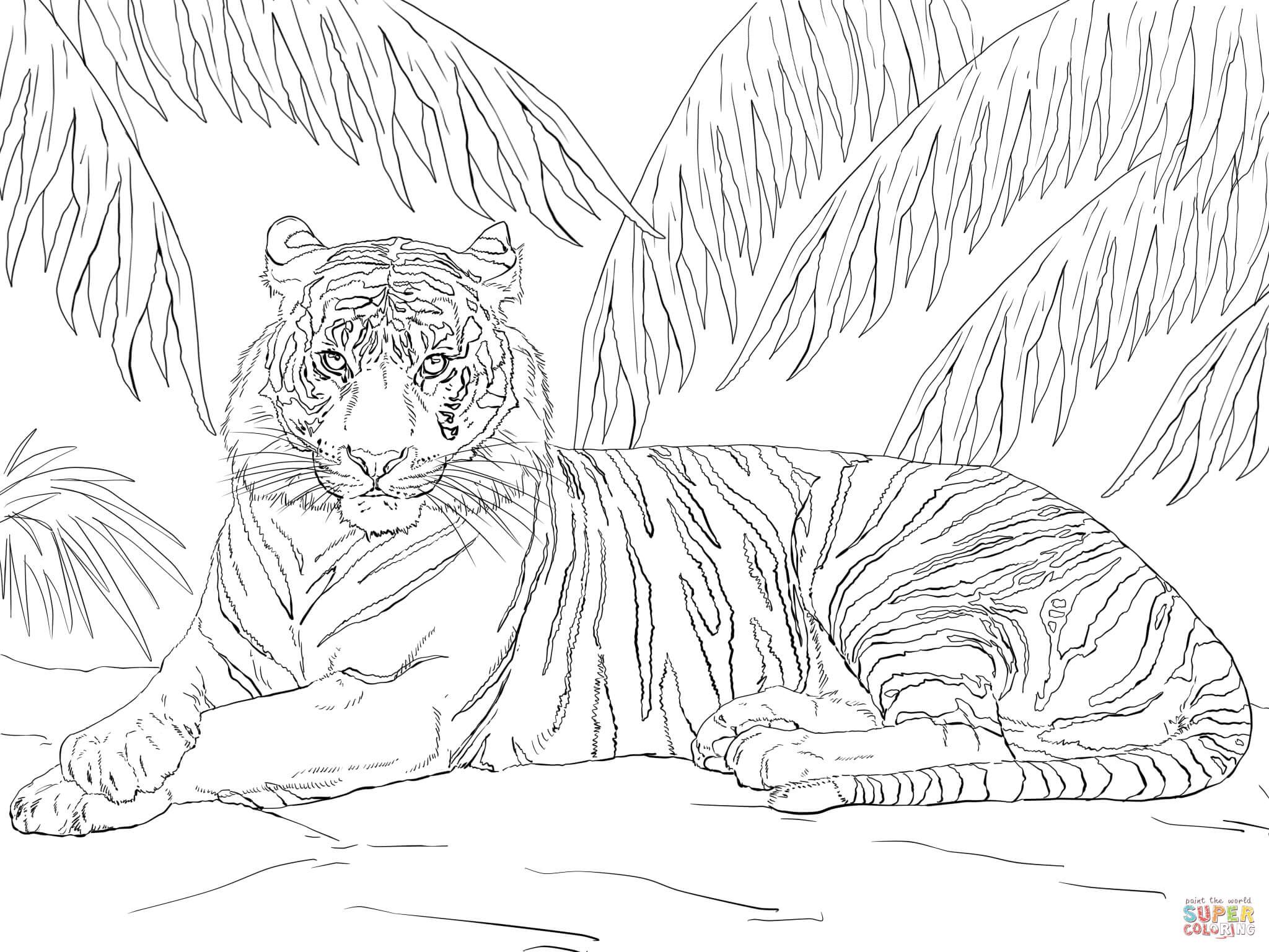 Tranh tô màu chúa sơn lâm hổ nằm nghỉ dưới tán cây
