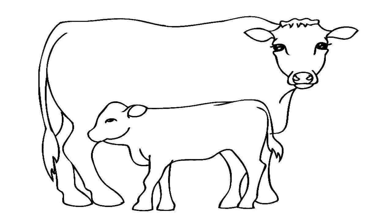 Tranh tô màu con bò con uông sữa