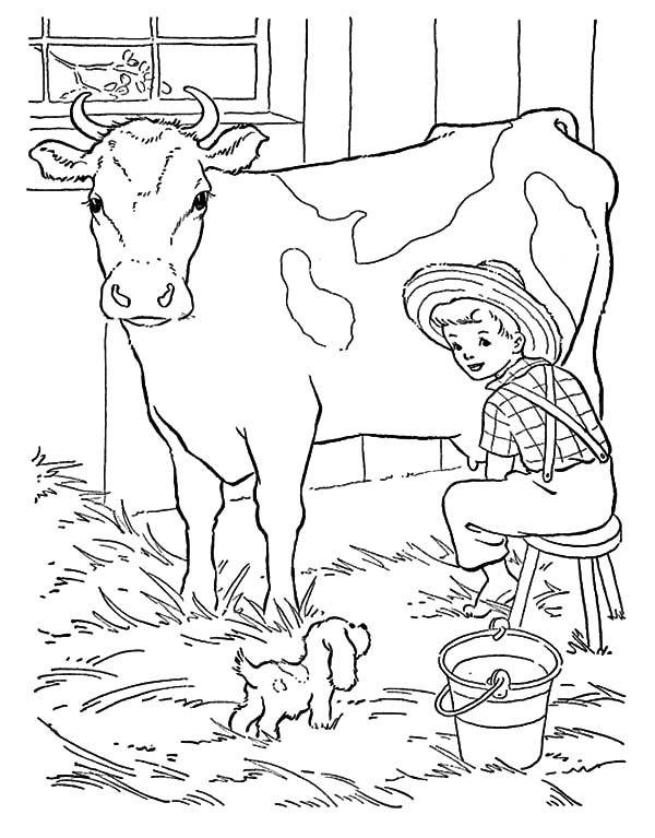 Tranh tô màu con bò lấy sữa