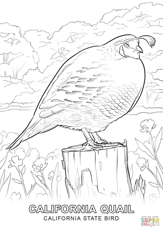 Tranh tô màu con chim to lớn