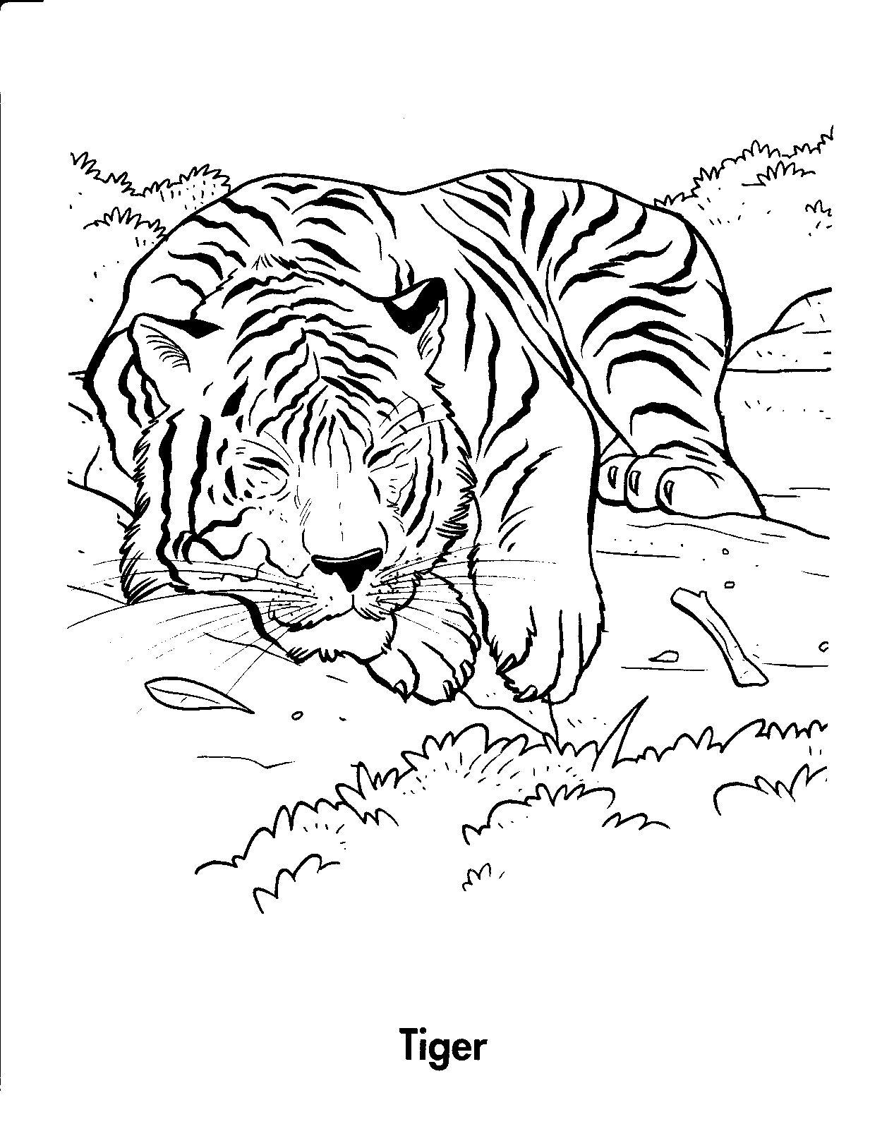 Tranh tô màu con hổ gối đầu ngủ