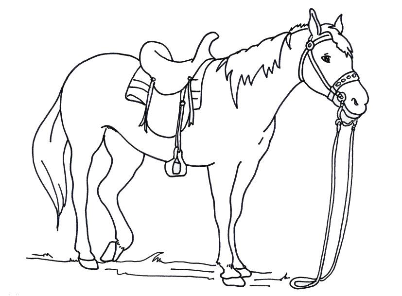 Tranh tô màu con ngựa đẹp
