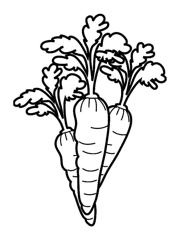 Tranh tô màu củ cà rốt