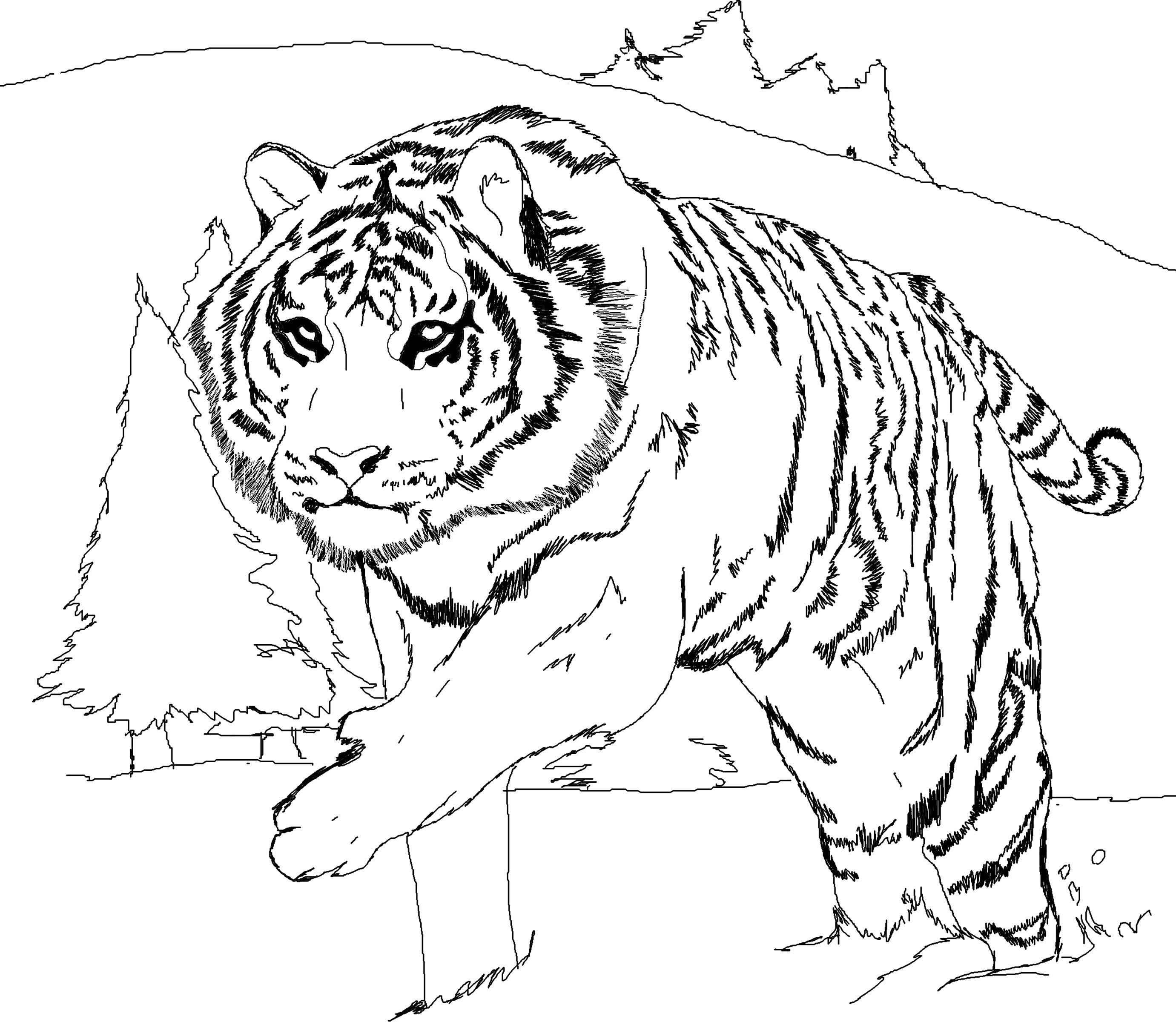 Tranh tô màu đại vương hổ đi dạo trong rừng tuyết