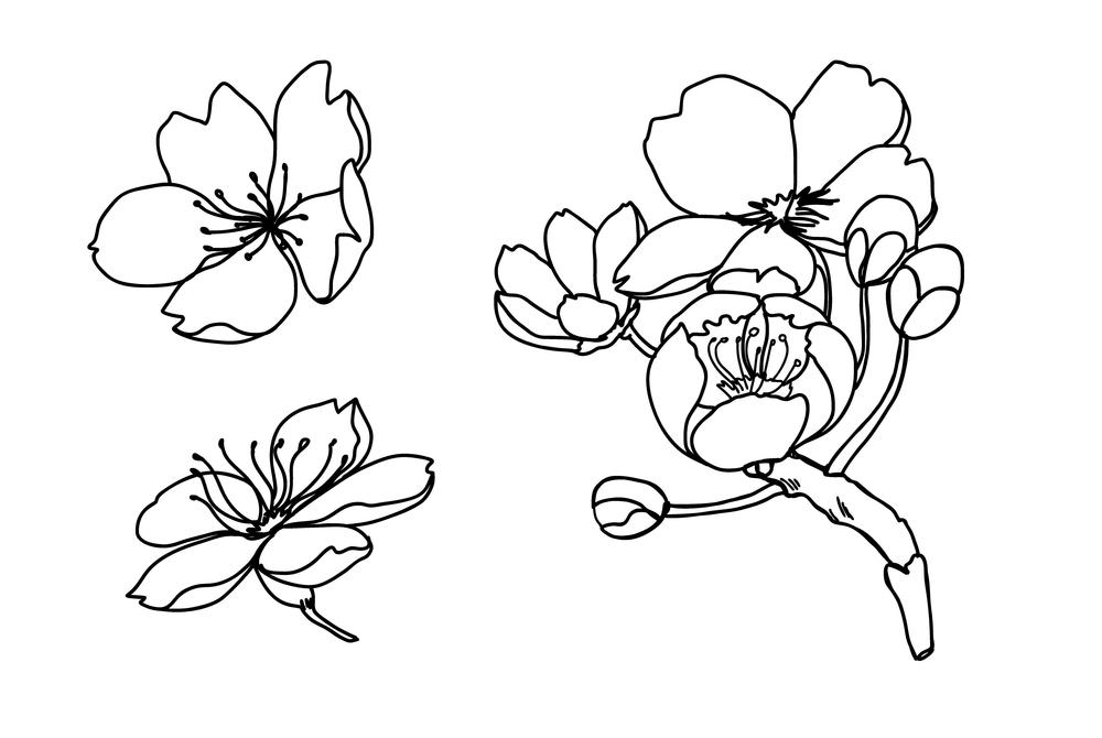 Tranh tô màu đoá hoa đào