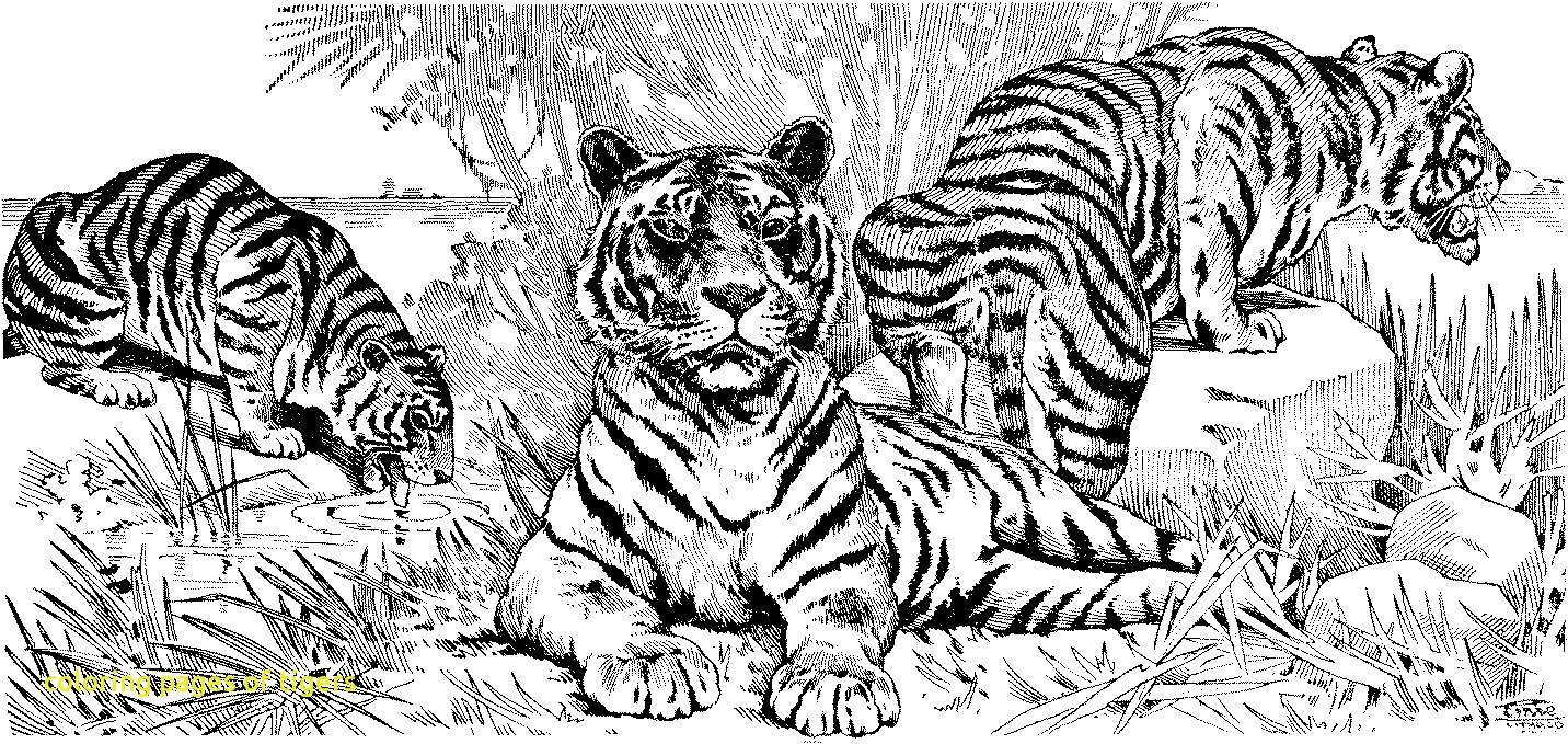 Tranh tô màu đoàn ba con hổ