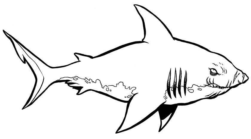 Tranh tô màu hình cá mập tức giận