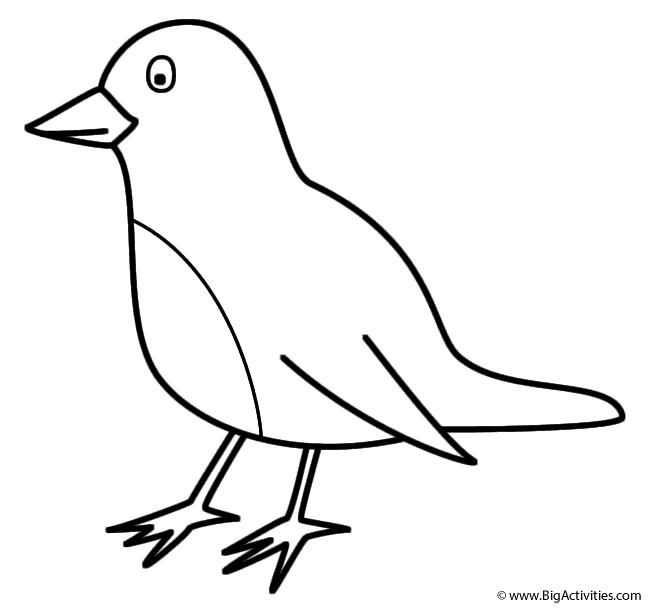 Tranh tô màu hình chú chim