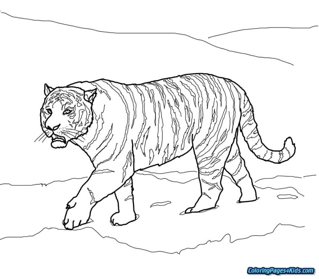 Tranh tô màu hình con hổ bước đi chậm rãi