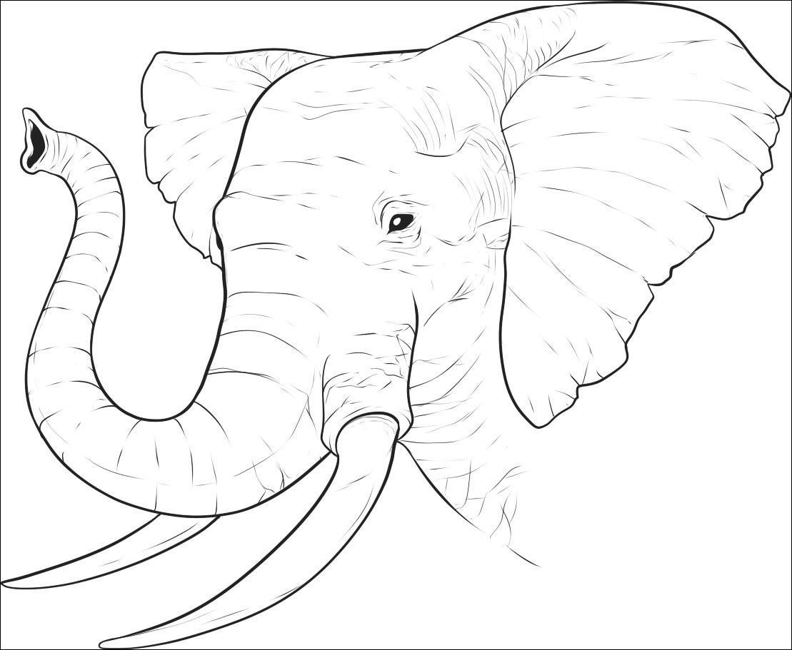 Tranh tô màu hình đầu voi
