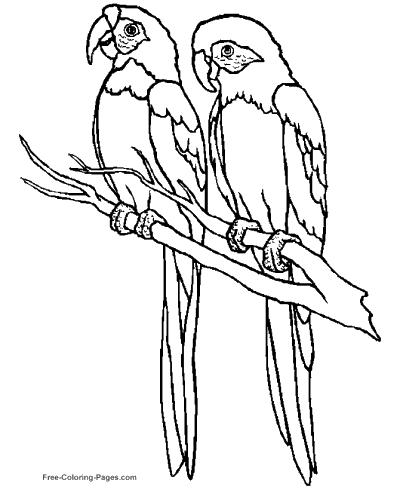 Tranh tô màu hình hai chú vẹt