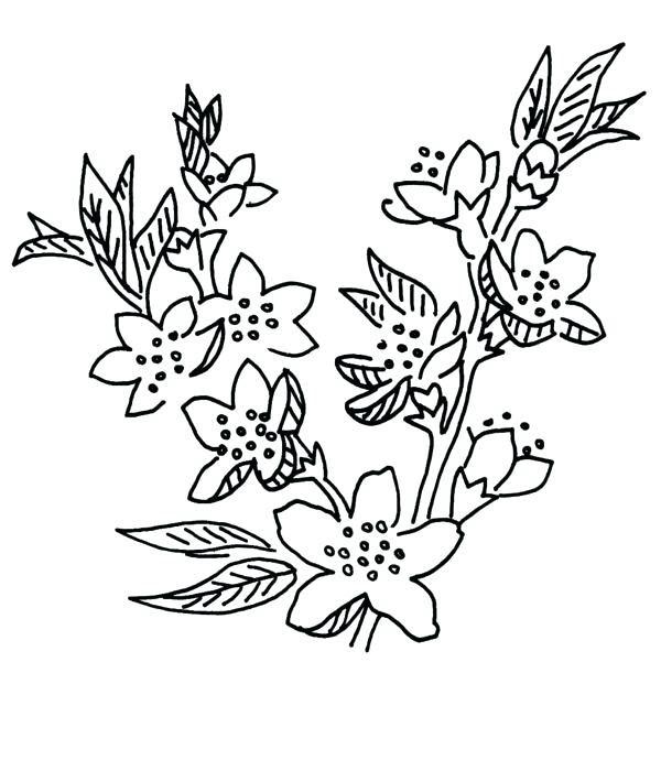 Tranh tô màu hoa anh đào đơn giản