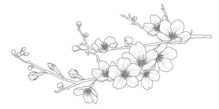 Tranh tô màu hoa anh đào mẫu