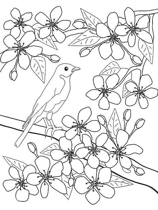 Tranh tô màu hoa đào đẹp và đơn giản
