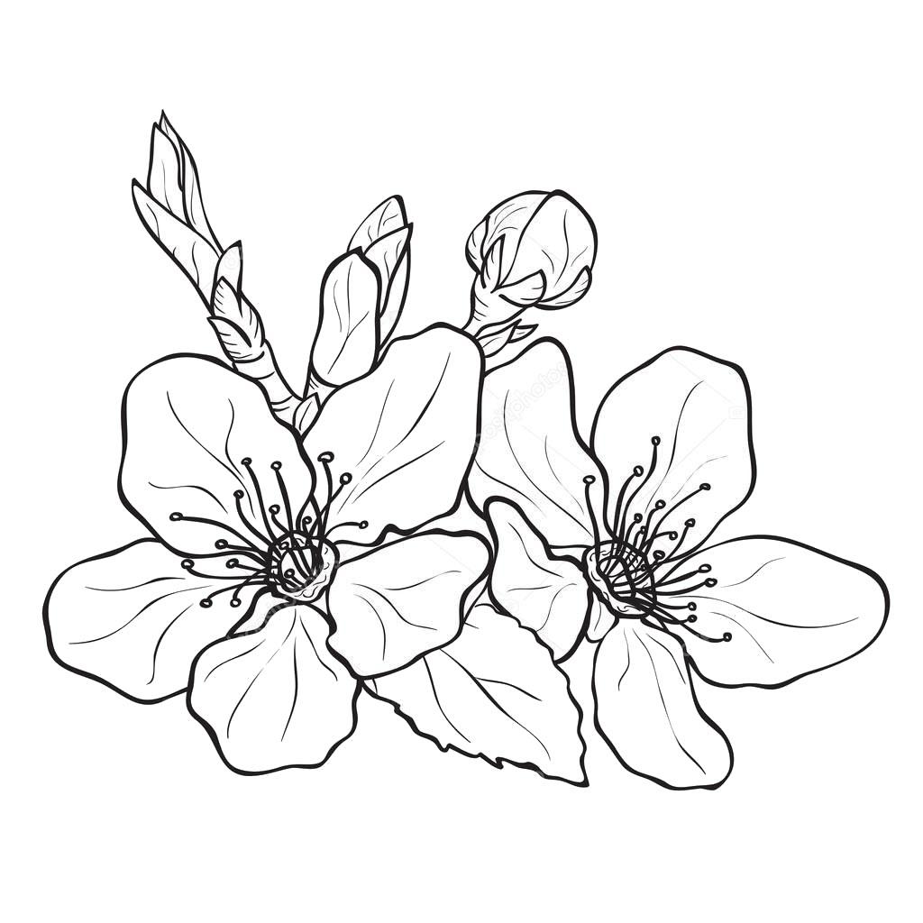 Tranh tô màu hoa đào ngày tết