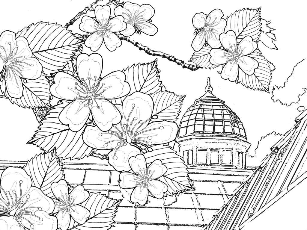 Tranh tô màu hoa đào Nhật Bản