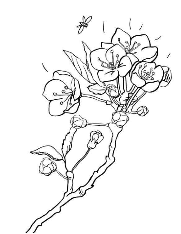 Tranh tô màu hoa đào nở