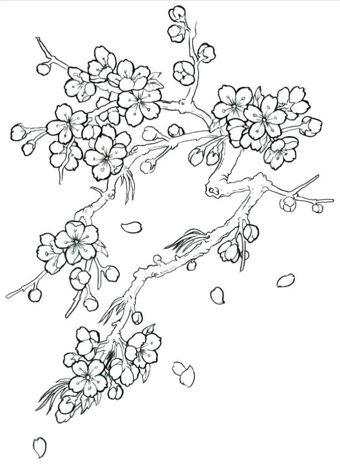 Tranh tô màu hoa đào rơi