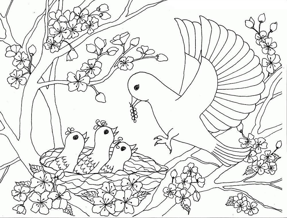 Tranh tô màu hoa đào và chim