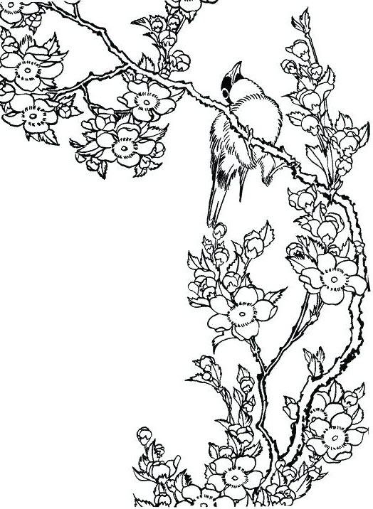 Tranh tô màu hoa đào và chú chim