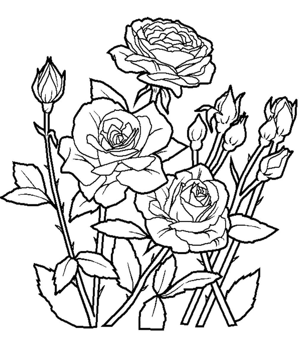 Tranh tô màu hoa hồng cho bé
