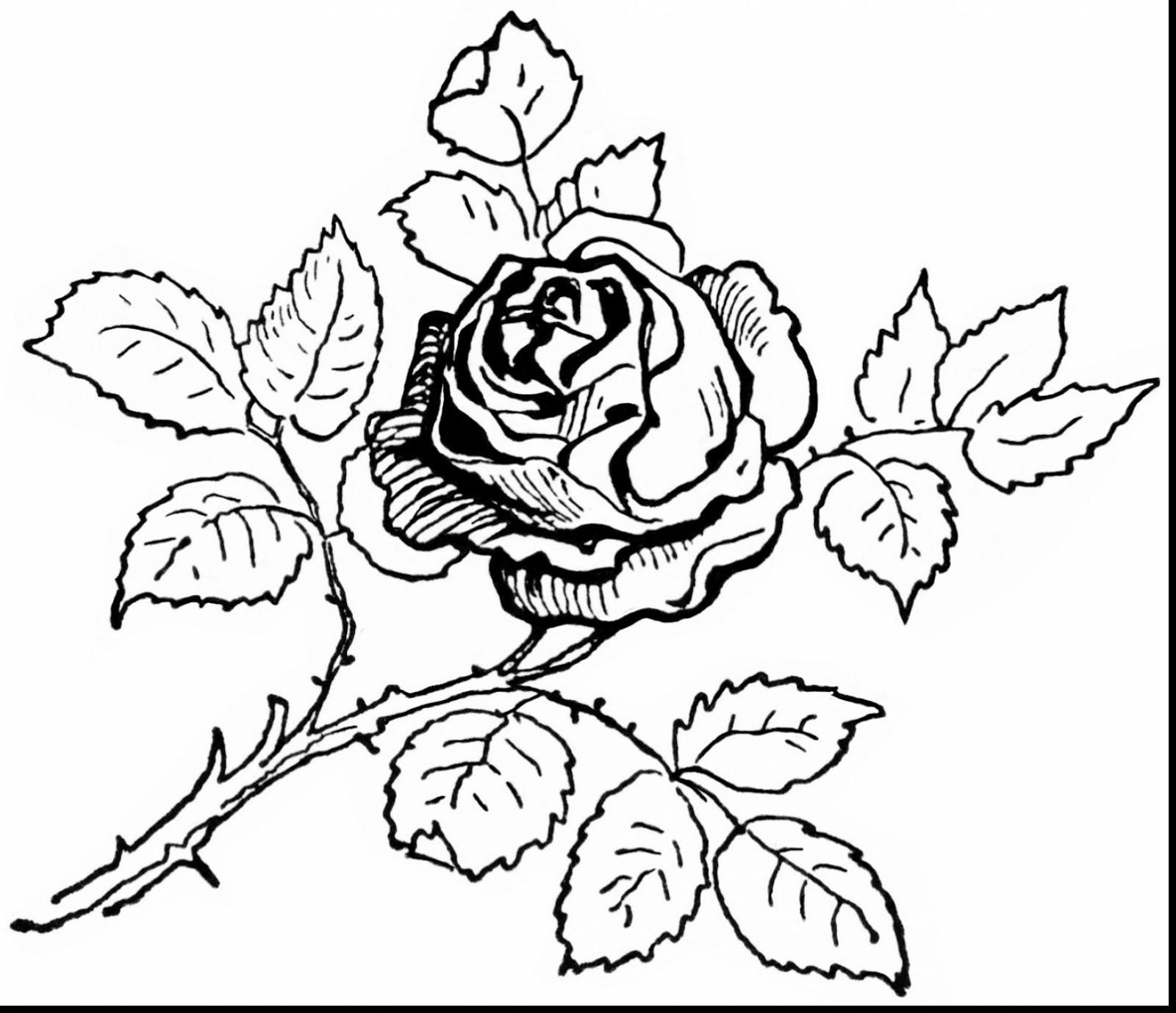 Tranh tô màu hoa hồng cực đẹp cho bé