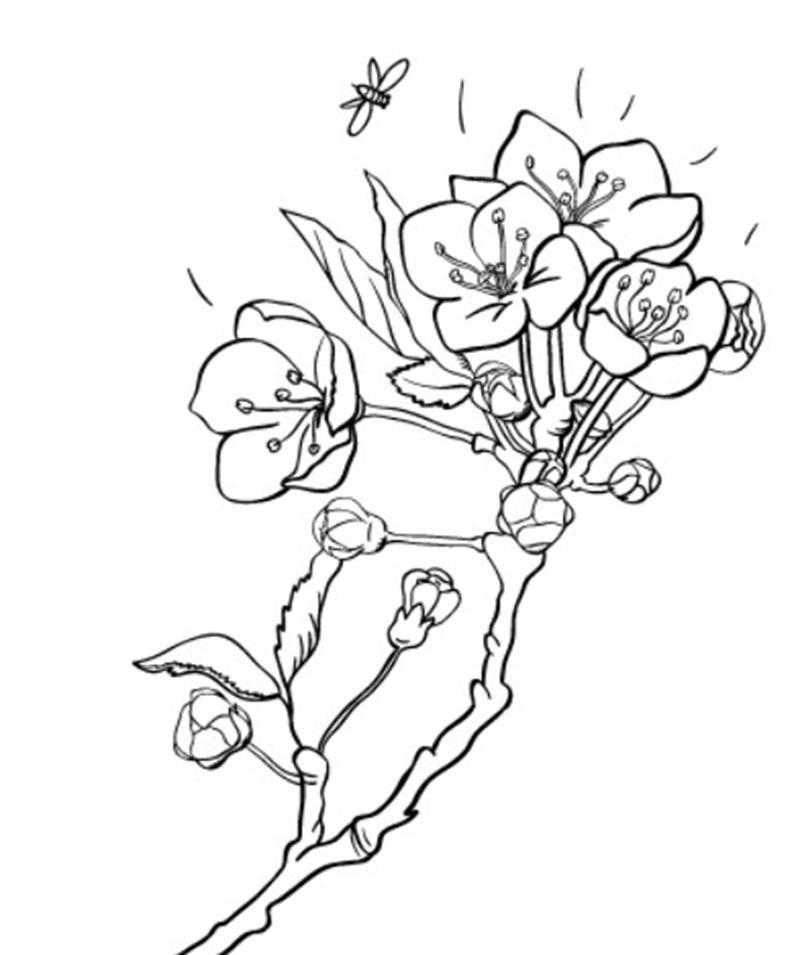 Tranh tô màu hoa mai ngày tết đẹp