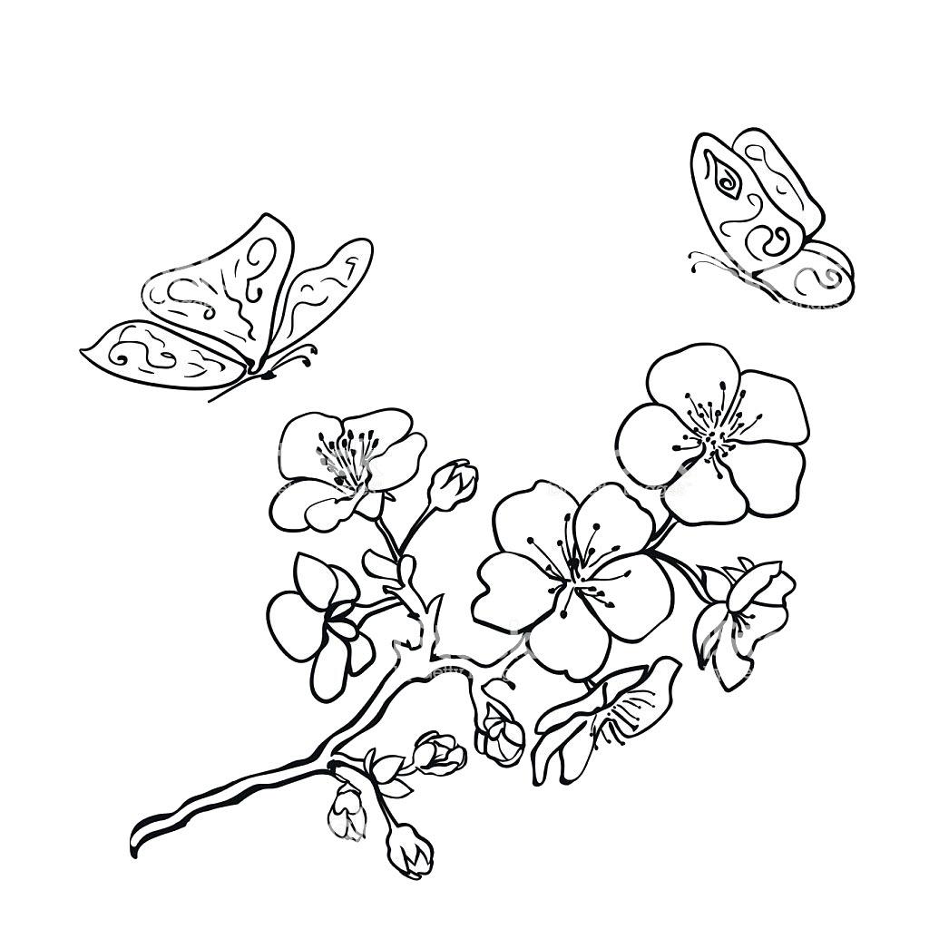 Tranh tô màu hoa mai ngày tết