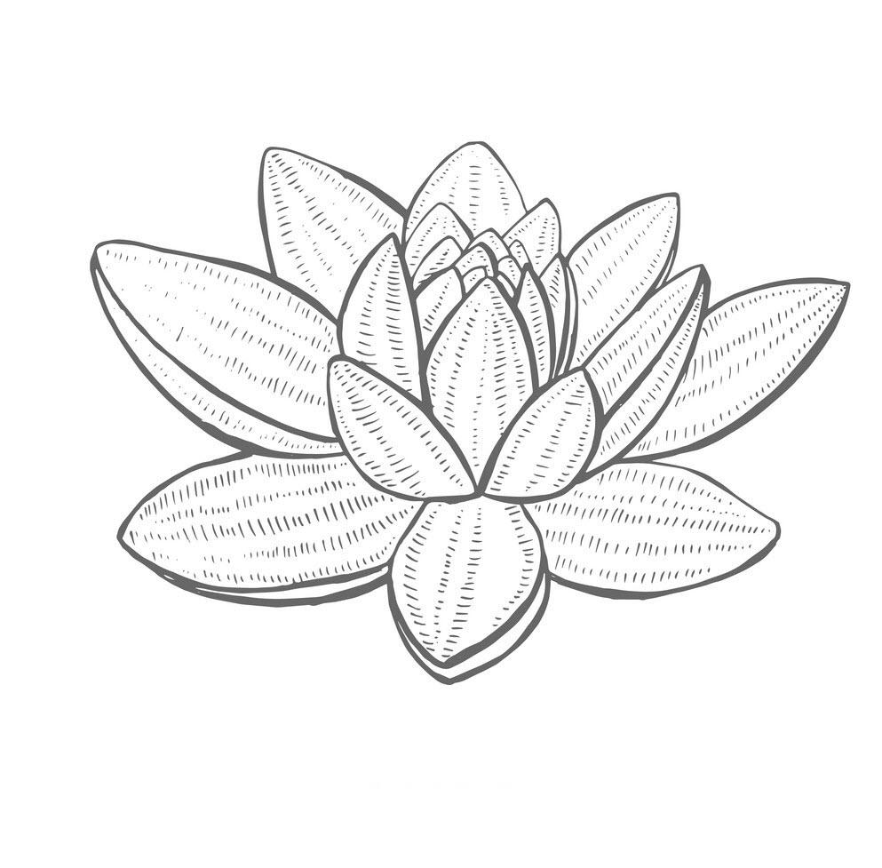 Tranh tô màu hoa sen 3D